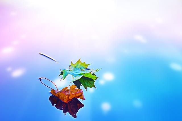 fall-1673107_640
