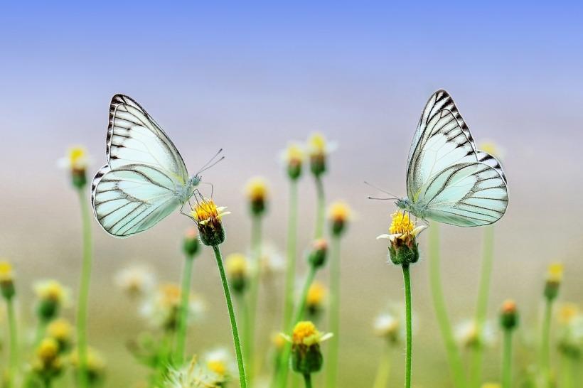 butterfly-1127666_1280